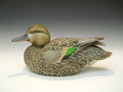 Green Winged Teal Hen